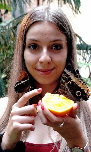 Costa Rica boldogsága az ELTE SEK lepkekertjében